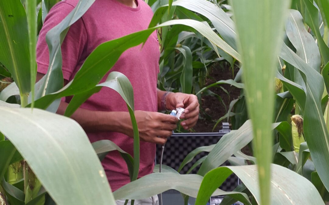 Which Crops Can Survive Drought? Nanosensors May Offer Clues